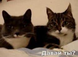 О чем разговаривают кошки? (видео)