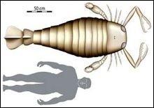 Найдена клешня скорпиона размером больше человека