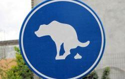 Москва подзаработает на собачьих экскрементах