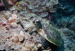 Полицейские Израиля искали наркотики – нашли морских черепах
