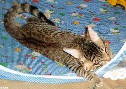 В США живет уникальный кот с двумя мордочками