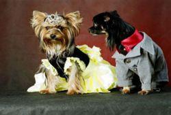 В Великобритании возникла мода на карнавальные костюмы для собак