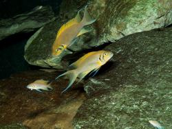 Новость на Newsland: Тяжёлые времена заставляют рыб принимать мигрантов