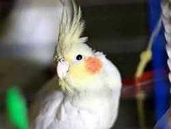 Новость на Newsland: Домашний попугай спас хозяина во время пожара