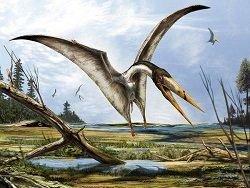 Исследователи откопали новый вид птерозавров в Румынии