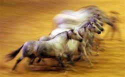 Репортаж с Международной выставки лошадей SICAB 2007 (фото)