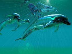 Сотни дельфинов выбросились на берег на острове Кабо-Верде