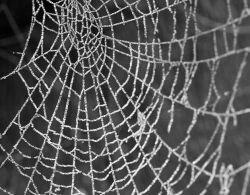 Пауки рискуют, украшая свою паутину