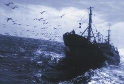 Рыбный промысел повлиял на эволюцию рыбы