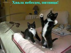 Смешные фотографии с животными (фото)