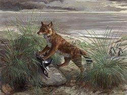 Новость на Newsland: Волки перебрались на Фолклендские острова по льду