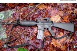 Власть испугалась? До выборов в Москве и Санк-Петербурге приобрести оружие будет невозможно
