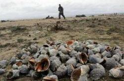 Катастрофа на Азове: отравленная рыба попадет на прилавки?