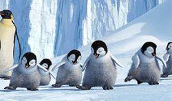 Австралийские пингвины обскакали Гарри Поттера