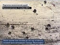Экологи WWF спасают птиц в Керченском проливе