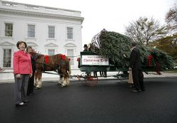 Рождественская елка для Белого Дома