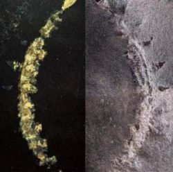 В Канаде нашли окаменелую экосистему возрастом в 425 млн лет