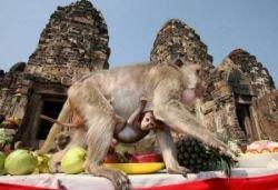 В Таиланде состоялся фестиваль обезьян (фото)