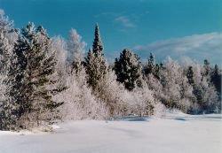 Предки американцев происходят из Сибири