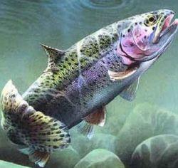 Ученые выяснили, что у рыб тоже есть характер