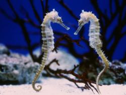 Новость на Newsland: Нехватка самок заставляет самцов заботиться о потомстве