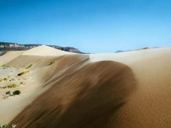 Новость на Newsland: Туркменистан развернул кампанию по озеленению пустыни