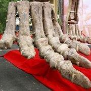 В китайской провинции Хэнань бригада защитников динозавров сразилась с полицией