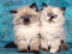 Евросоюз запретил торговлю мехом собак и кошек