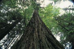 """ООН досрочно выполнила план \""""посадить миллиард деревьев\"""""""