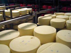 Сырный завод в Бельгии остановлен из-за зловония