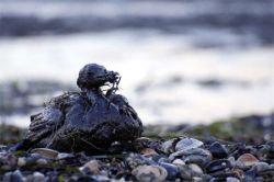 Крымская война может начаться из-за разлива российской нефти