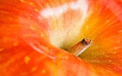 В Новороссийском порту выявлено около 70 т турецких фруктов с превышенным содержанием пестицидов