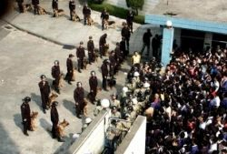 Забастовка в провинции Гуандун: милиция спустила на людей собак