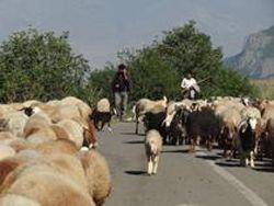 Армения: иранские овцы - угроза национальной безопасности