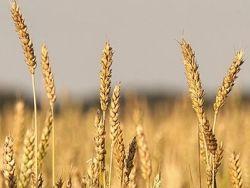 Три четверти России признали неподходящими для земледелия