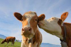 За ценовой сговор на греческих производителей молока наложен штраф