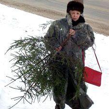 Стоимость живых елок к новогодним праздникам взлетела до небес