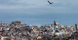 Прожорливая плесень избавит мир от мусора