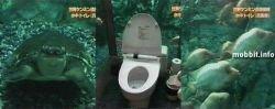 Туалет, находящийся в аквариуме (видео)
