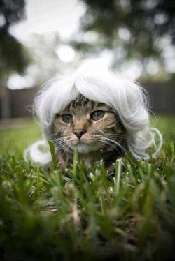 Домашних животных оденут в парики (фото)