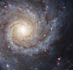 Рождественская фотография галактики М74