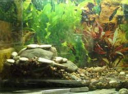 В Красноярске появятся 400 видов представителей экзотической фауны в новом акватеррариуме