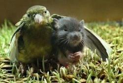 Братская любовь среди животных (фото)
