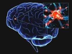 Стресс обновляет клетки мозга