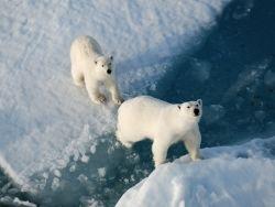 Новость на Newsland: Активисты призывают создать в Арктике морской заповедник