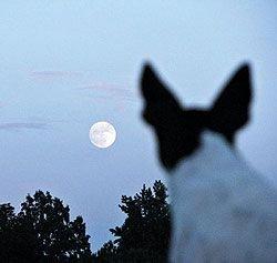 В Ульяновске намереваются ввести «комендантский час» для домашних животных