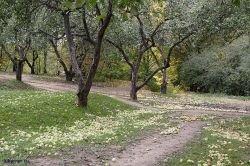 Бывший совладелец интернет-магазина Ozon — компания Direct Group — вложит 66 млн евро в выращивание яблок в Краснодарском крае