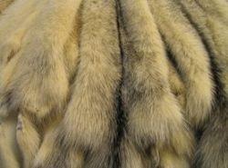 Модные дома продают натуральный мех под видом искусственного