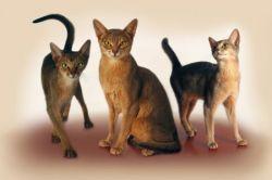 Генетическое выведение новых животных
