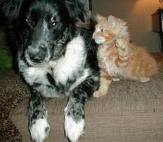 Лучшие новогодние отели для котов и собак